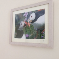 Puffin Wall Photo.jpg